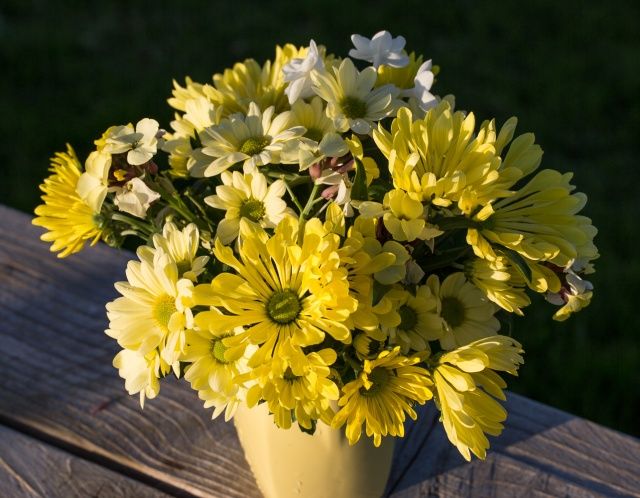 Vase of Yellow Chrysanthemums
