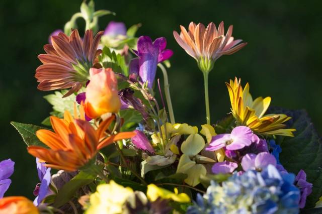daisies cut flowers