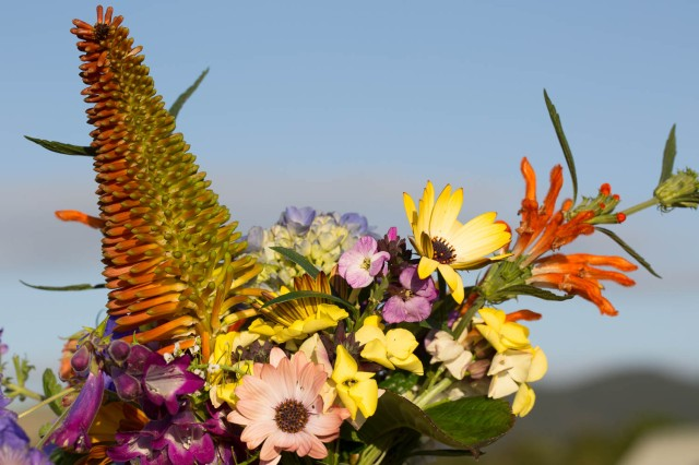 kniphofia and leonotis cut flowers