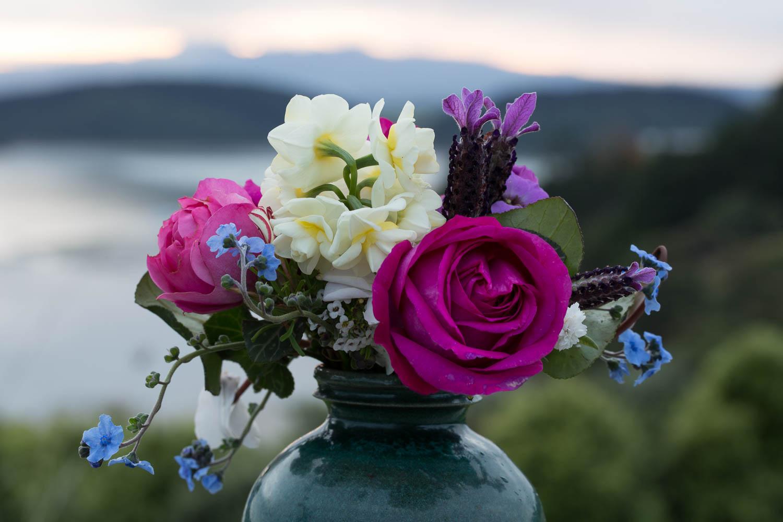 roses against sunrise cut flowers