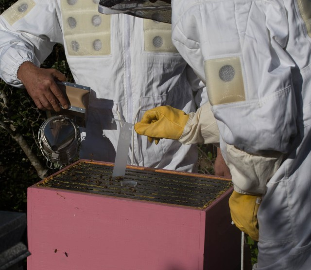 Putting varroa treatment into beehive