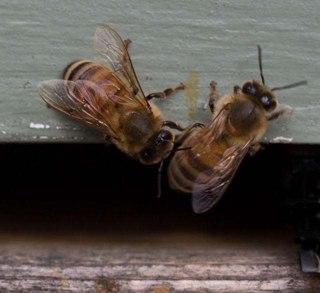 bee conversation outside hive