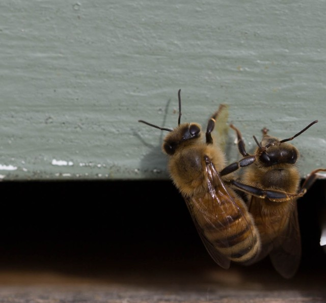 bee conversation or cleaning