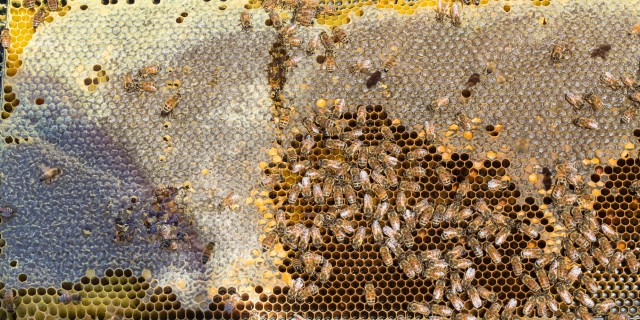 bee hive with honey and pollen