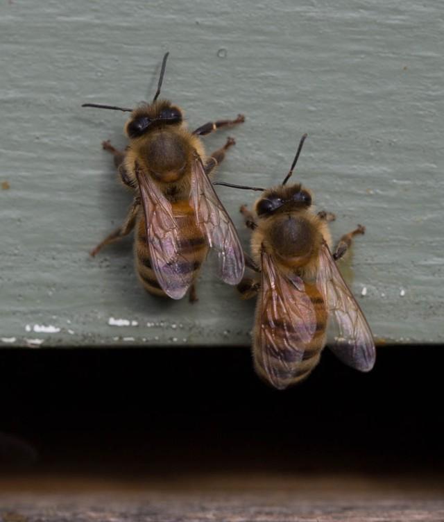 bees conversing