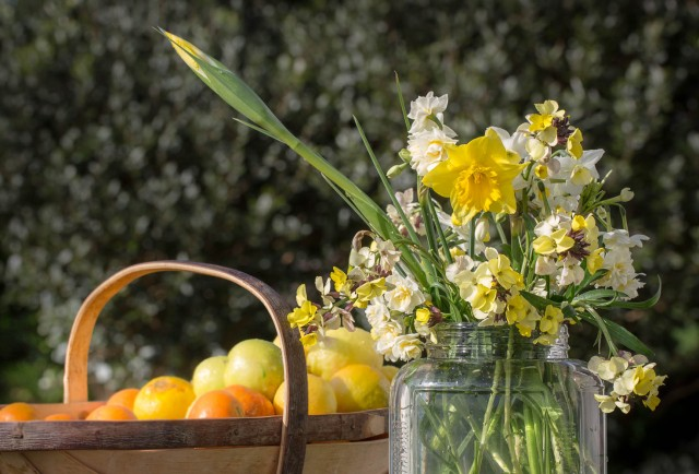 cut flowers narcissus wallflowers and citrus fruit