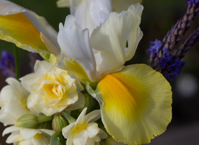 iris and narcissus erlicheer