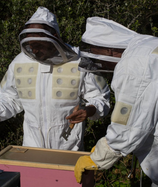 putting the top on the hive