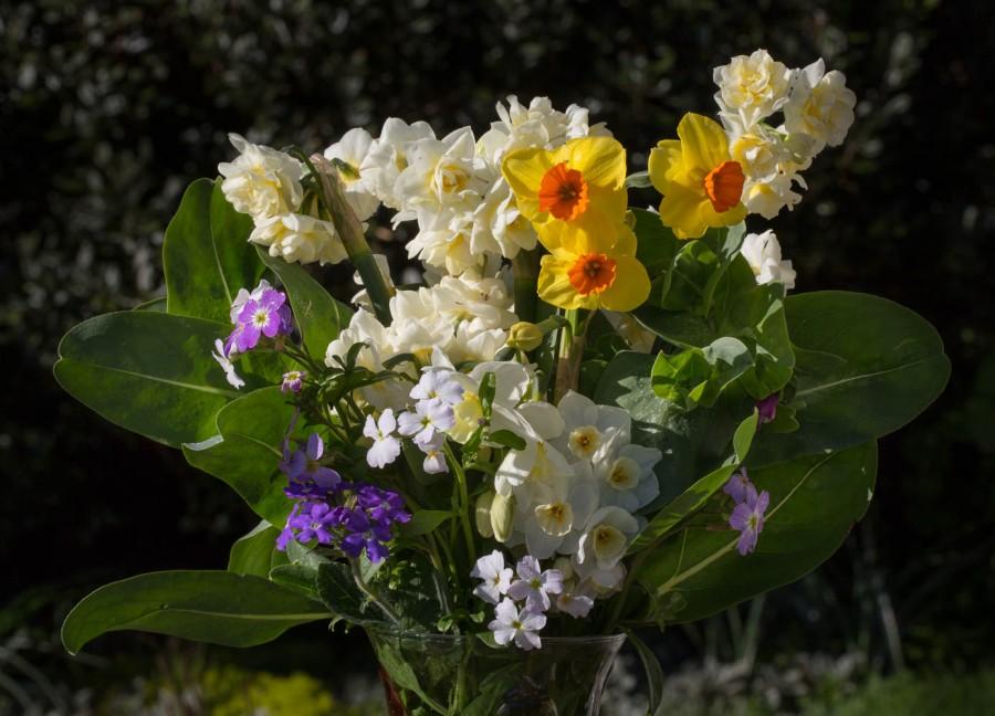 spring bulbs narcissus and verbena