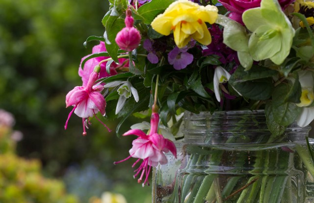 fuschias cut flowers in rain
