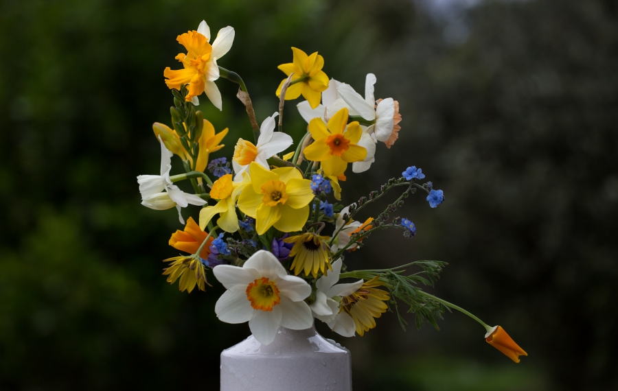 daffodils and narcissus cut flowers with california poppies and forget me nots