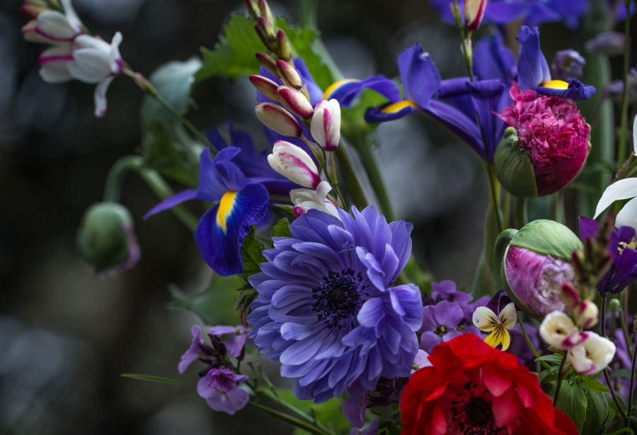 anemones and poppies with ixia