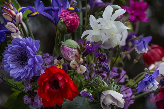 anemones narcissus Thalia Columbine and poppies