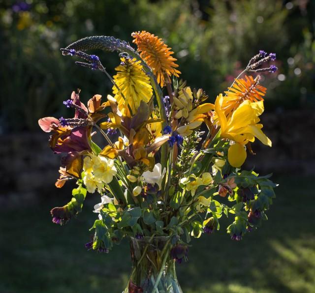 cut flowers iris and kniphofia and honeywort