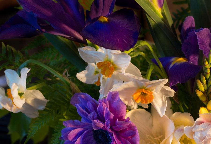 narcissus geranium and anemone