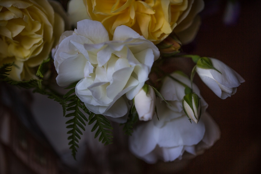 roses iceberg and graham thomas