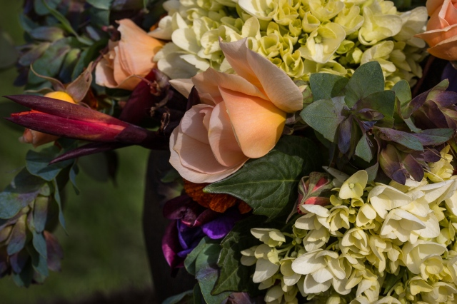 crepuscule rose, canna and hydrangea flowers