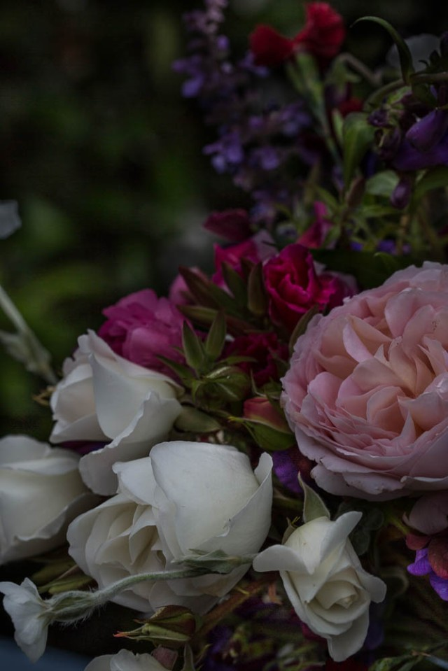 flowers abraham darby rose and iceberg roses