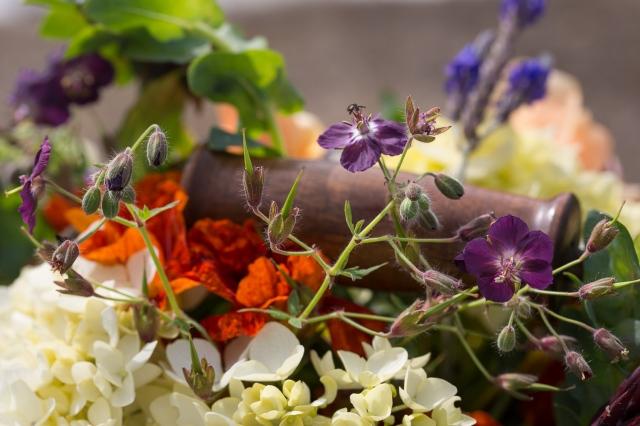geranium phaeum cut flowers