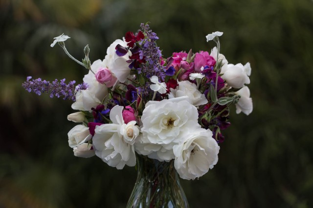 flower photography - white roses dark background
