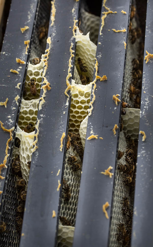 bees natural comb in hive