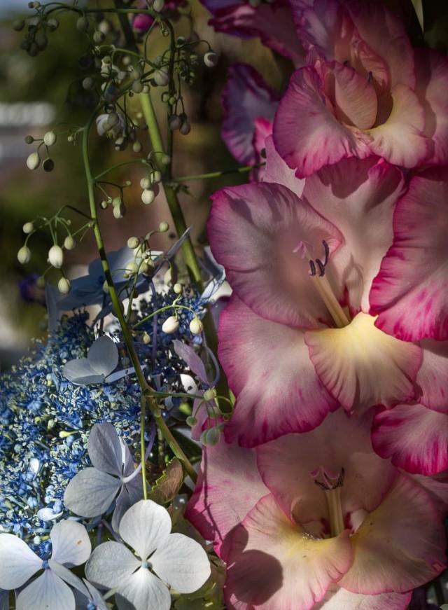 gladioli flowers macro