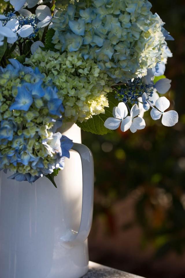 hydrangea flowers in jug