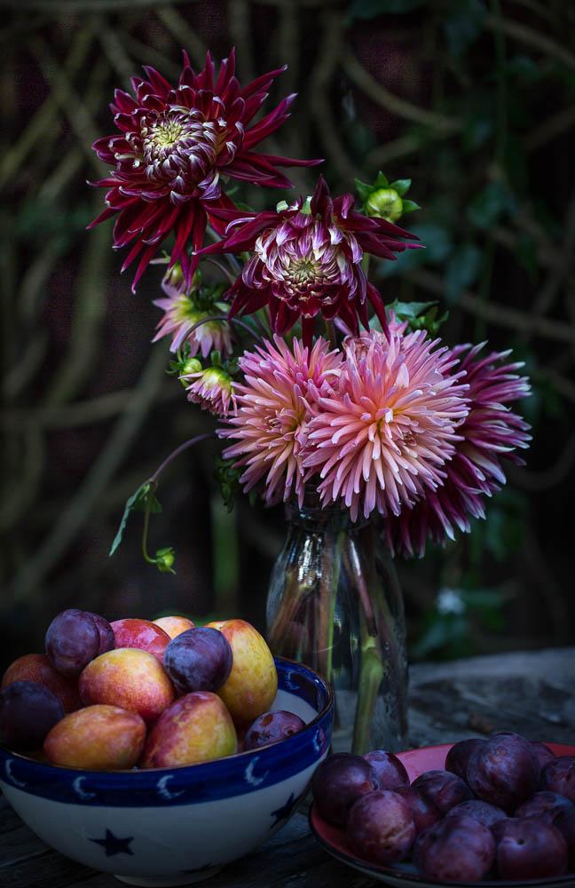 Dahlia flower and fruit