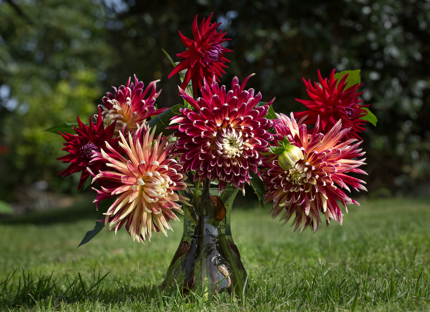 Red Dahlias in a vase
