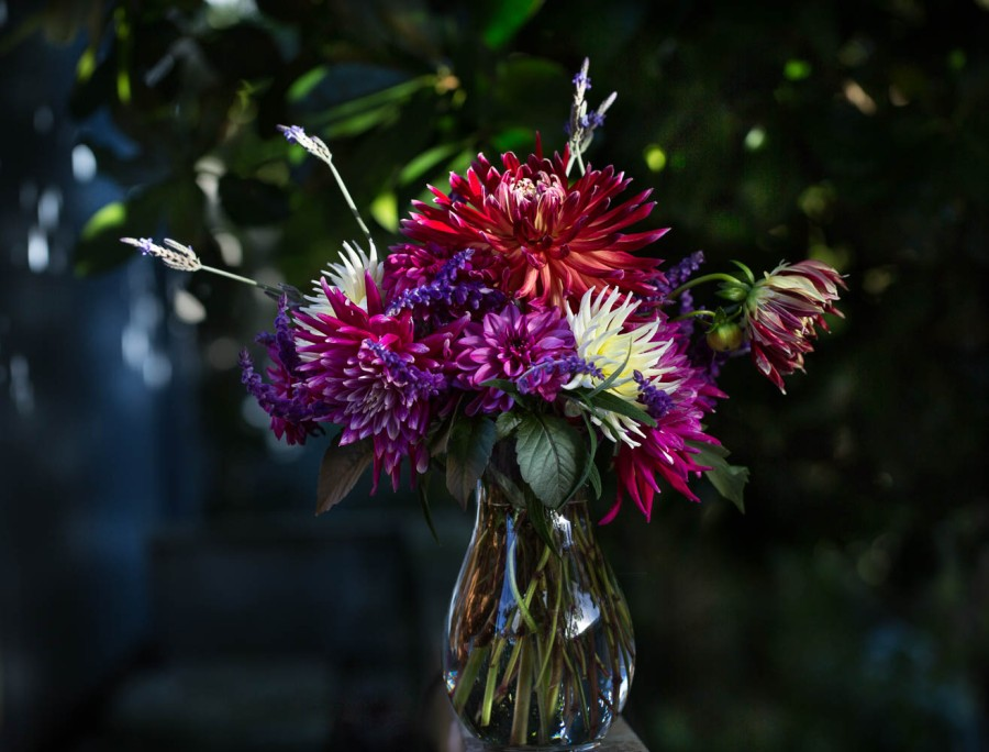vase of red and pink dahlias