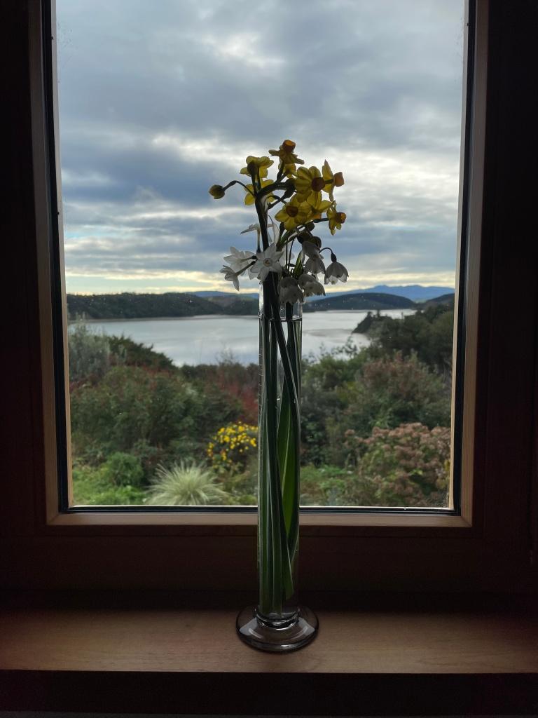 spring bulbs in a beaker by window