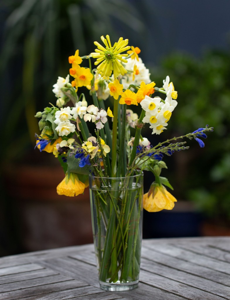 Vase of cut flowers - narcissus